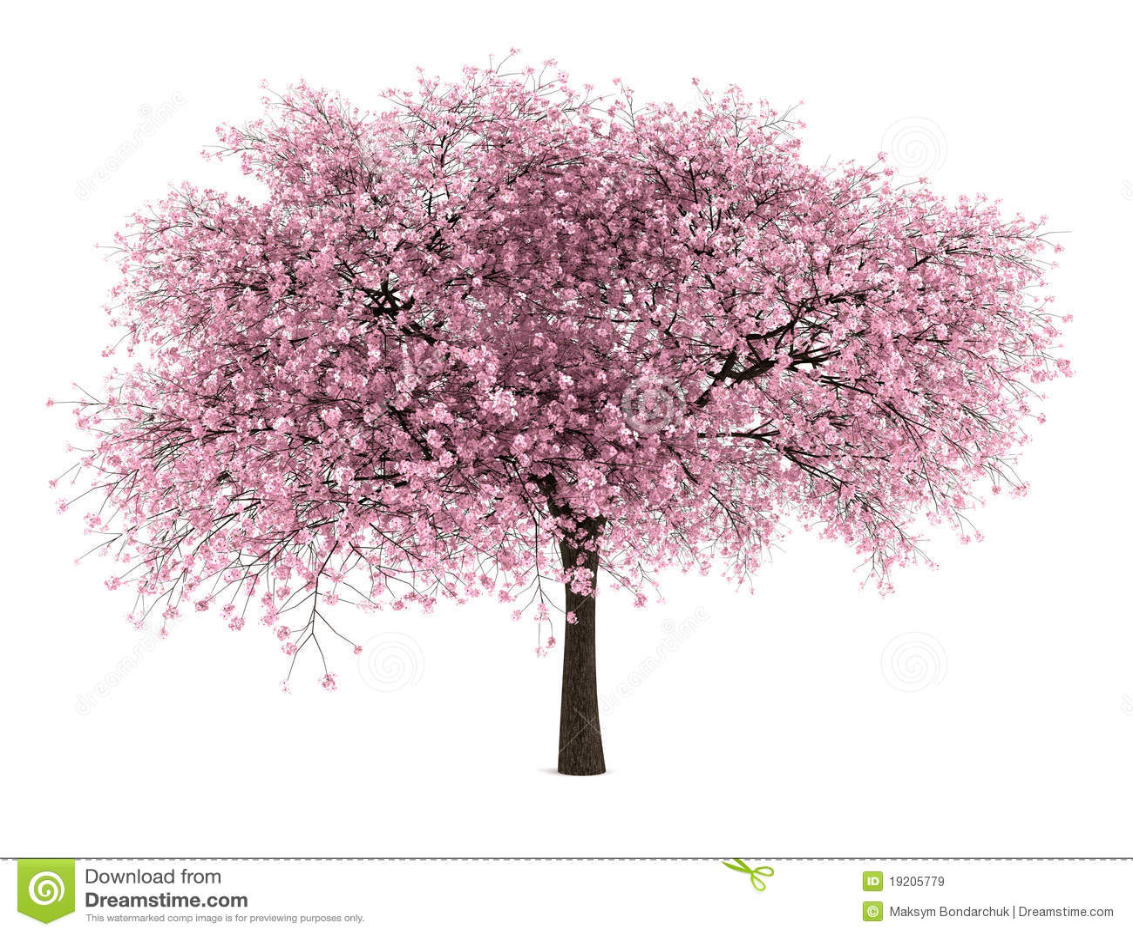 cerisier aigre d 39 isolement sur le blanc images libres de droits image 19205779. Black Bedroom Furniture Sets. Home Design Ideas