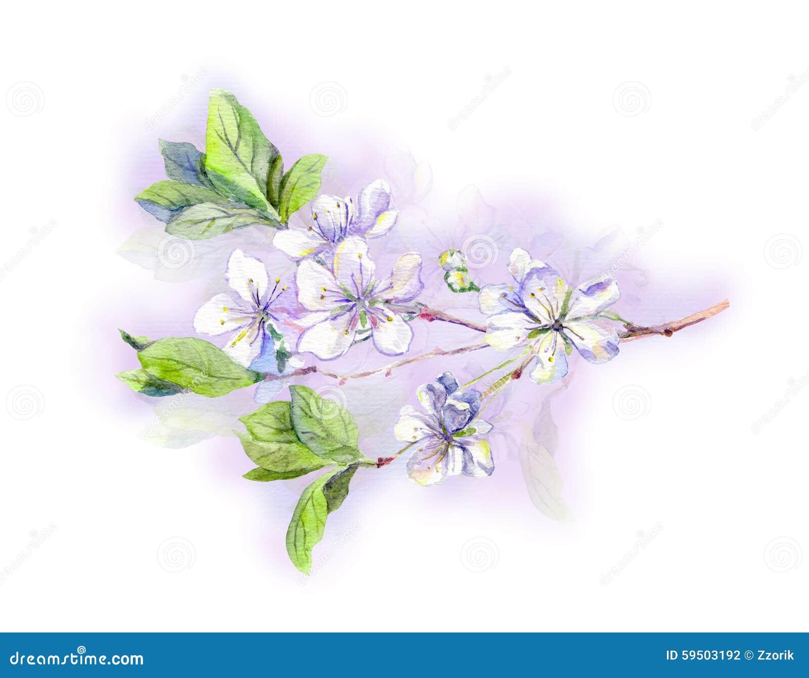 cerisier blanc de floraison sakura fleur japonais aquarelle illustration stock image 59503192. Black Bedroom Furniture Sets. Home Design Ideas