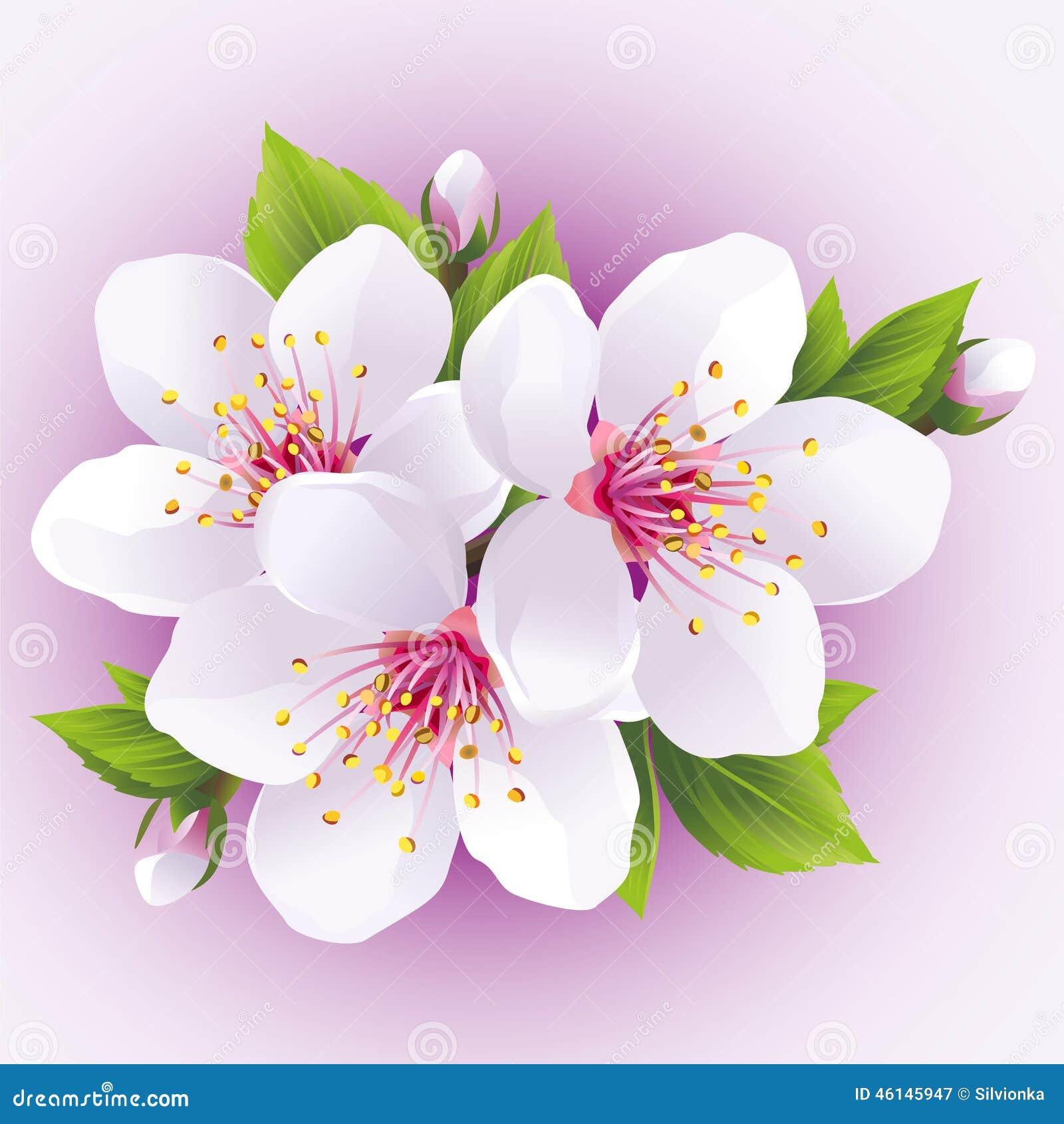 cerisier de floraison de japonais de branche de sakura illustration de vecteur image 46145947. Black Bedroom Furniture Sets. Home Design Ideas