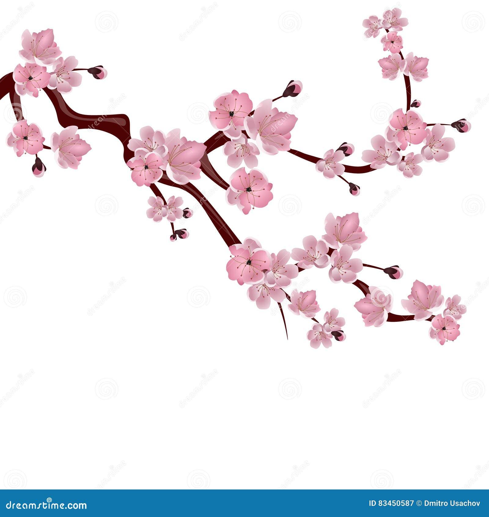 Fleurs De Cerisier Aquarelle
