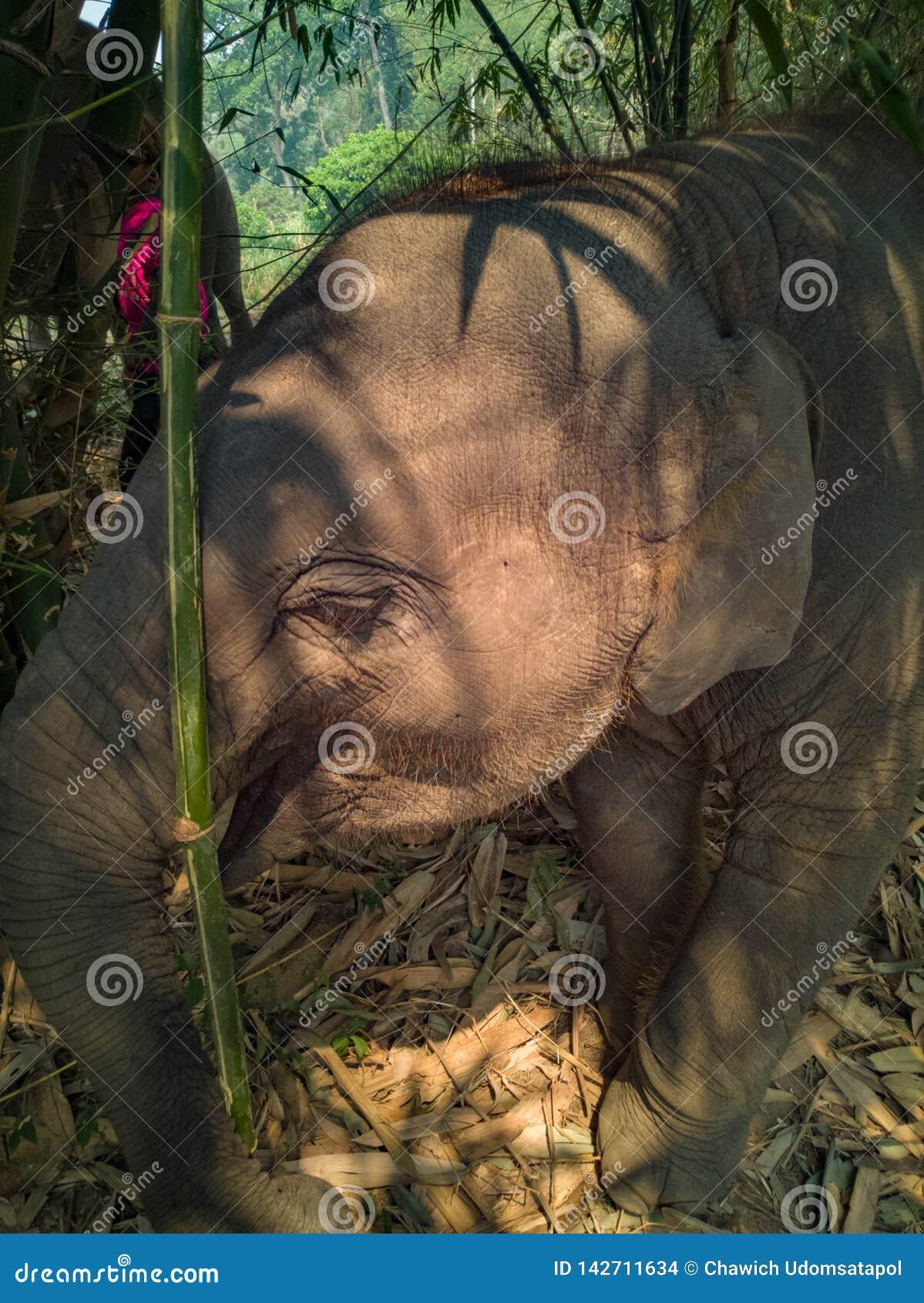 Cerrado encima de elefante del bebé de la foto