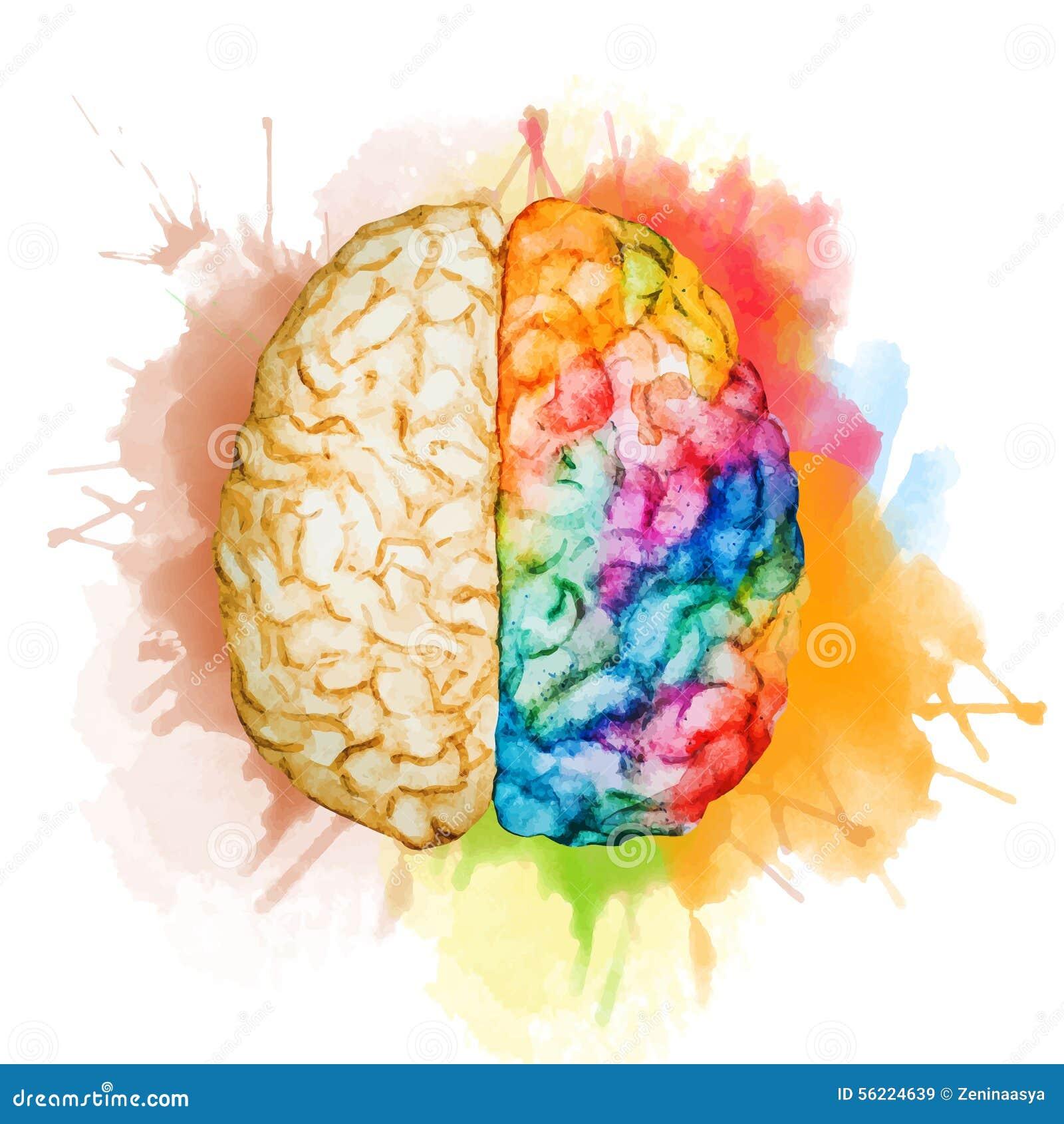 Cerveau d aquarelle