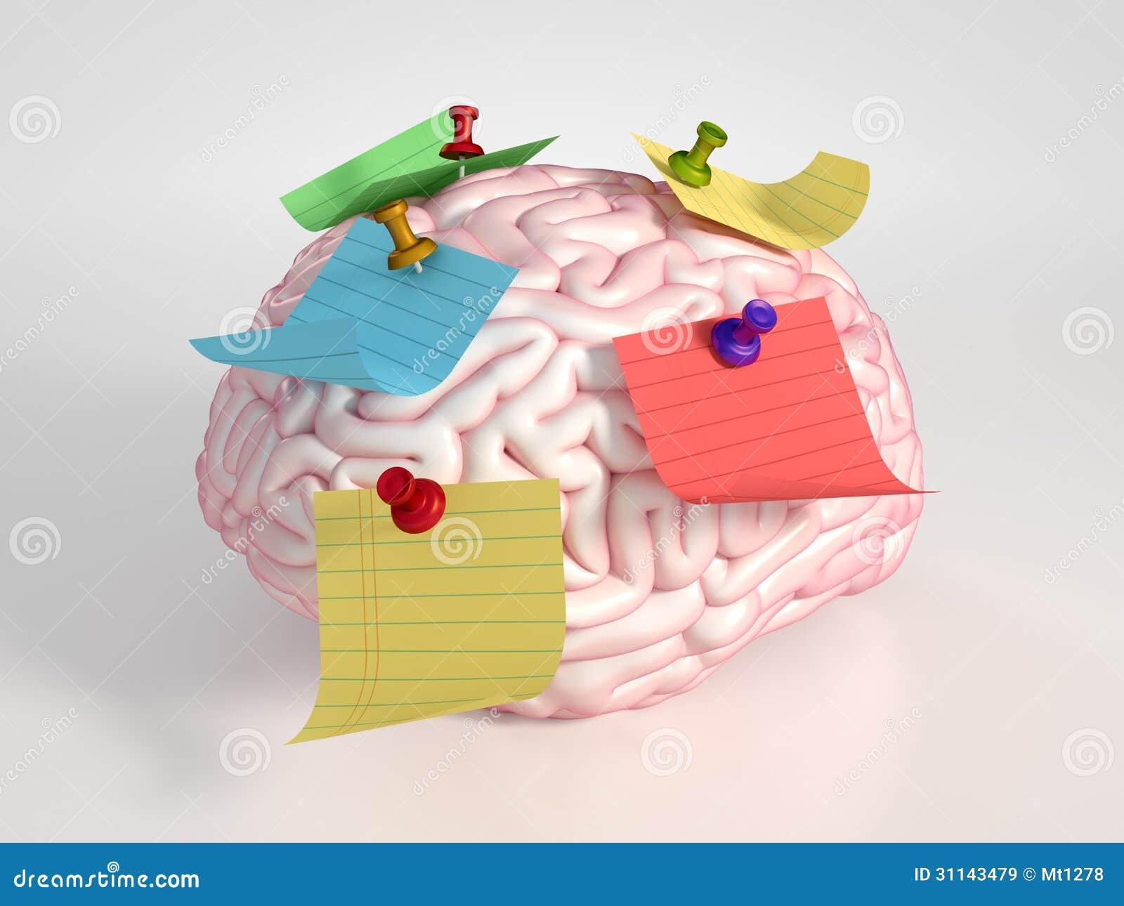 Cerveau et autocollants