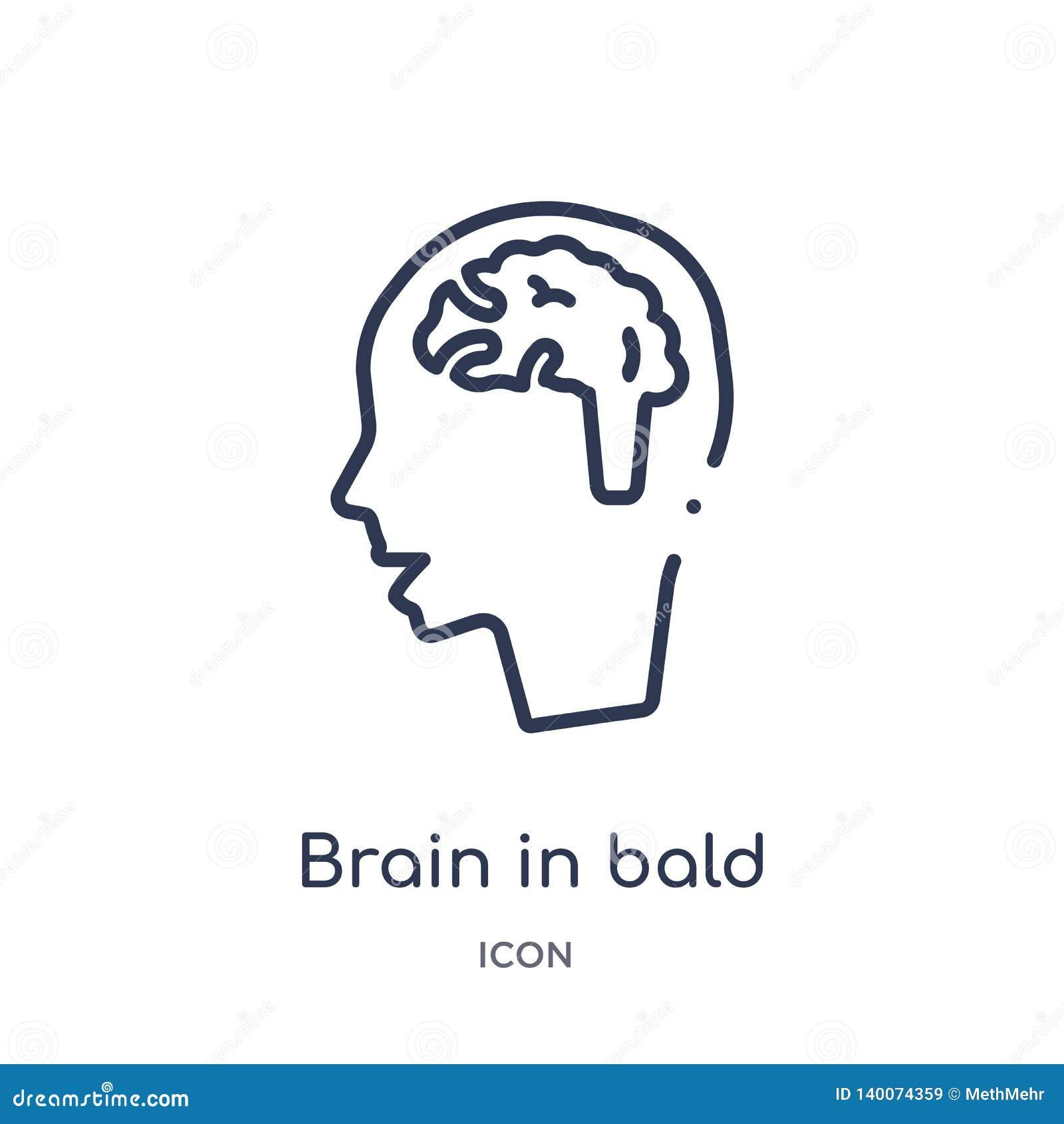 Cervello lineare nell icona capa maschio calva dalla raccolta medica del profilo Linea sottile cervello nell icona capa maschio c