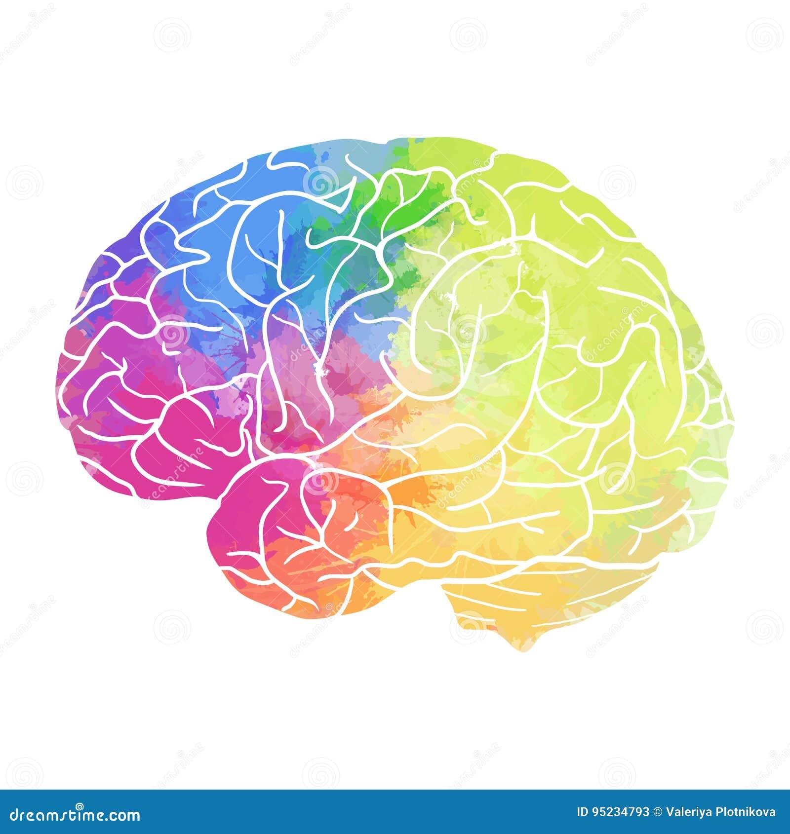 Cervello umano con lo spruzzo dell acquerello dell arcobaleno su un fondo bianco