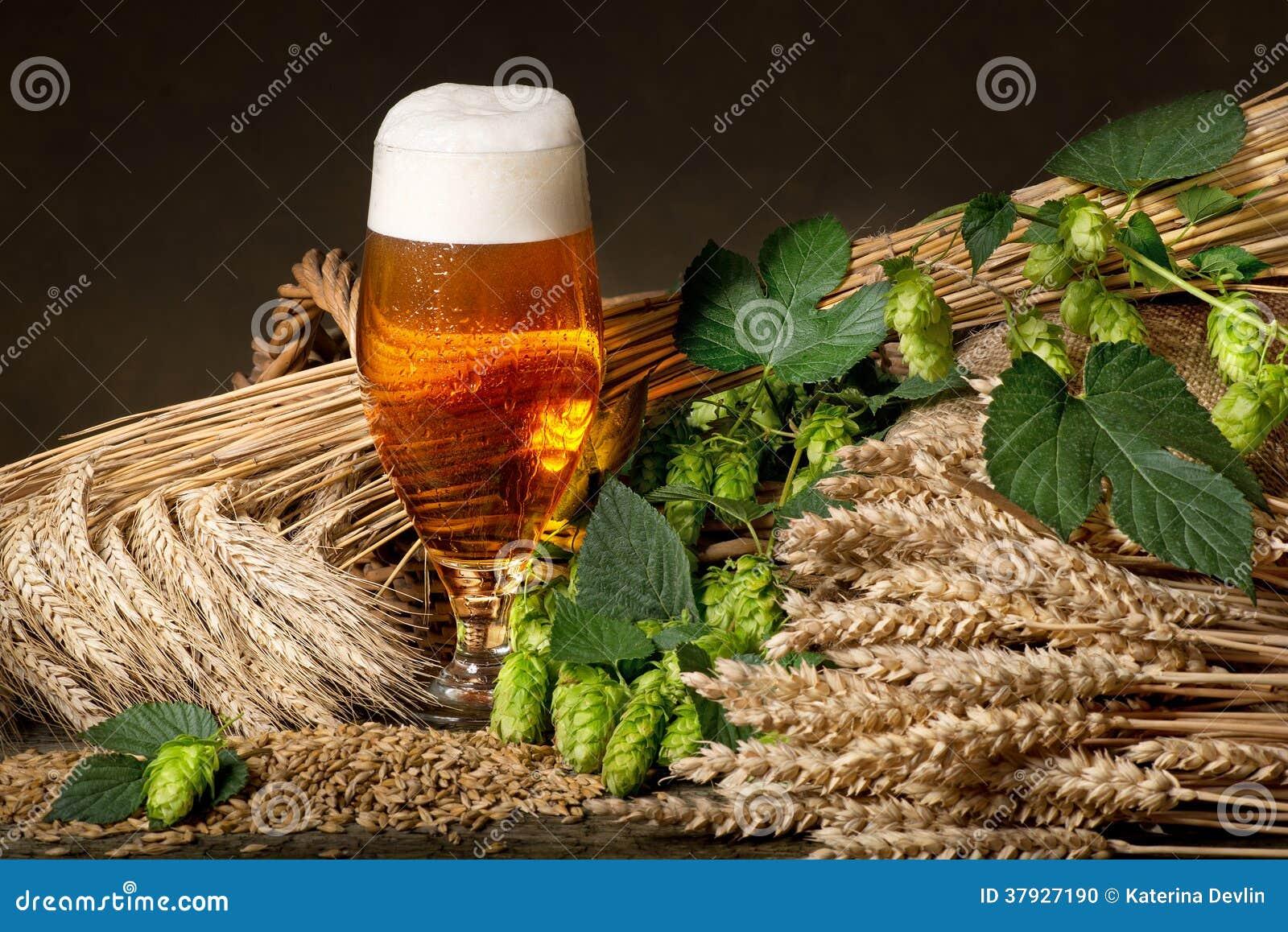 Cerveza con los saltos y la cebada