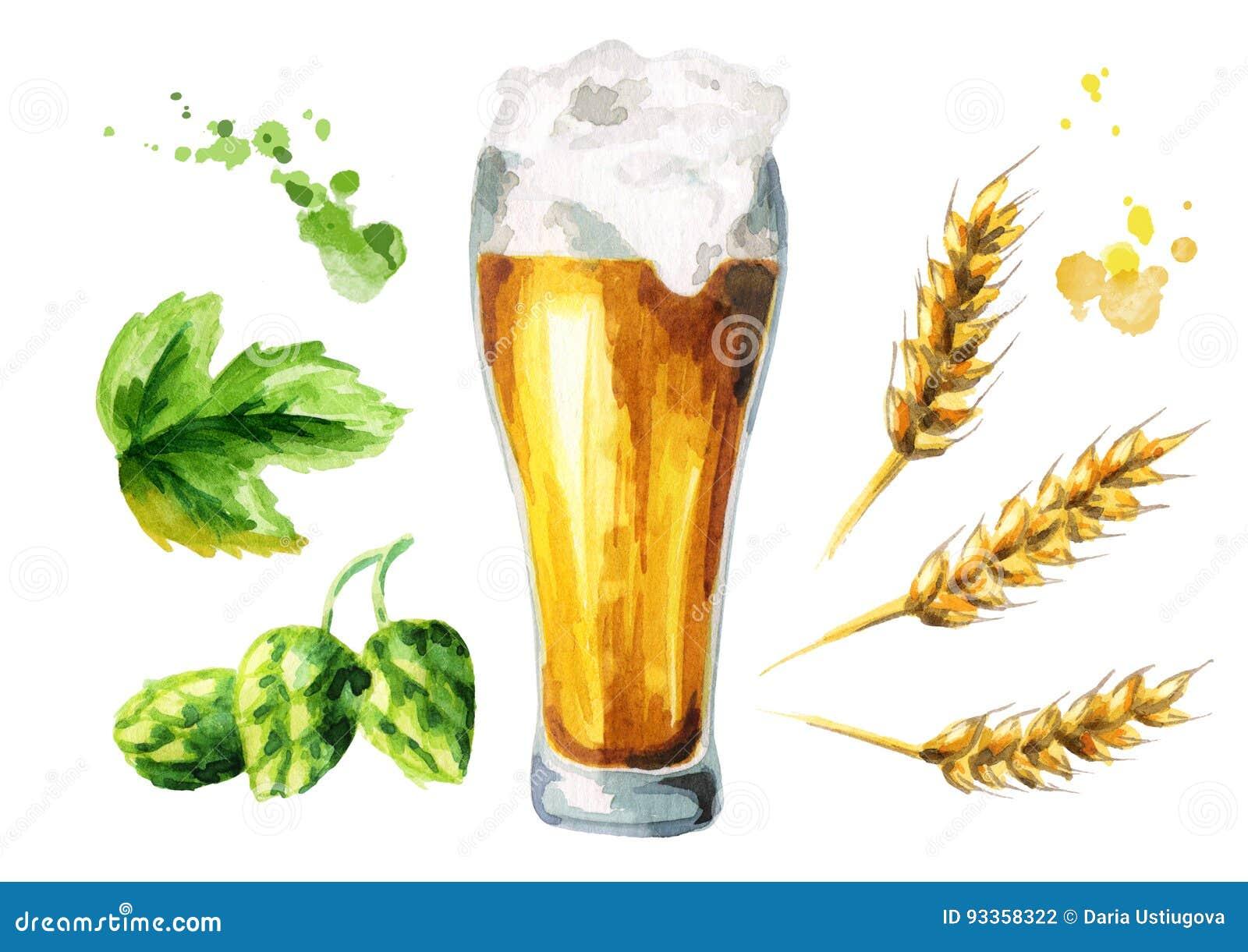 Cerveza, saltos, sistema de la malta watercolor