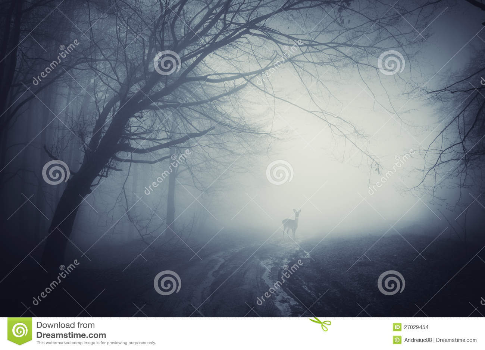 Cervi su una strada in una foresta scura dopo pioggia