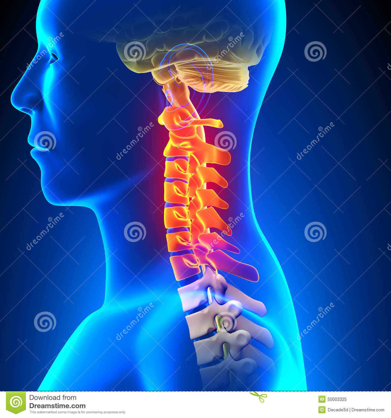 Cervical Spine Anatomy Pain Concept Stock Illustration