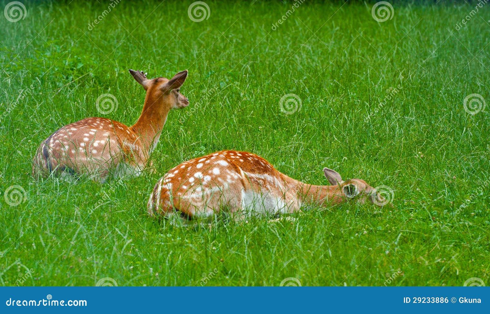 Download Cervos foto de stock. Imagem de bavaria, país, alimentação - 29233886