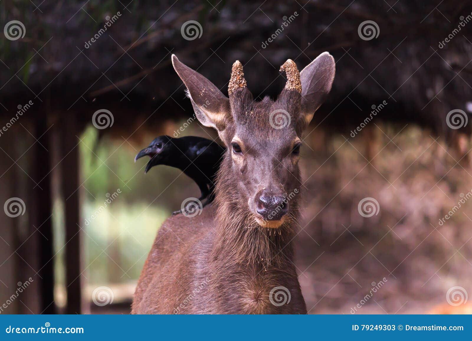 Cervos manchados de surpresa
