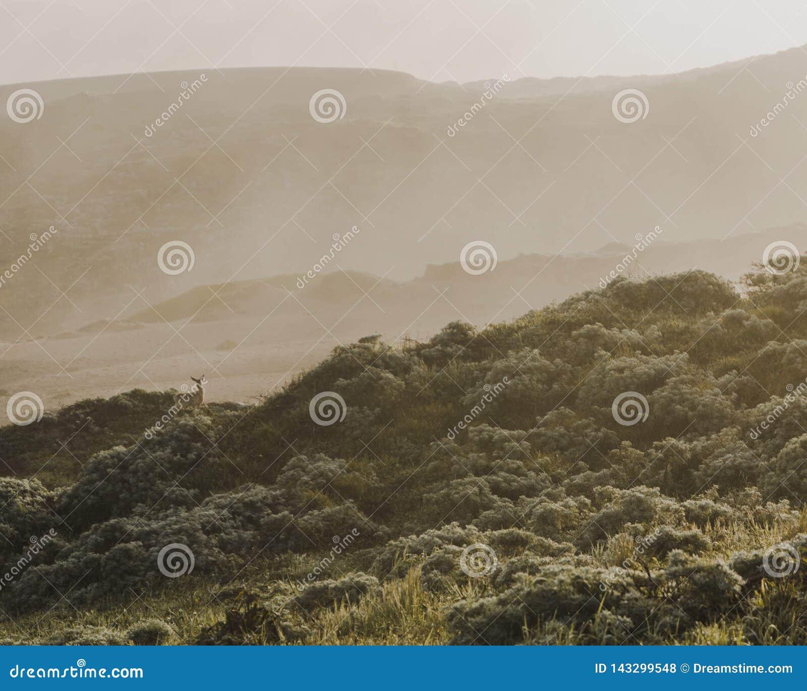 Cervos manchados em uma manhã enevoada litoral