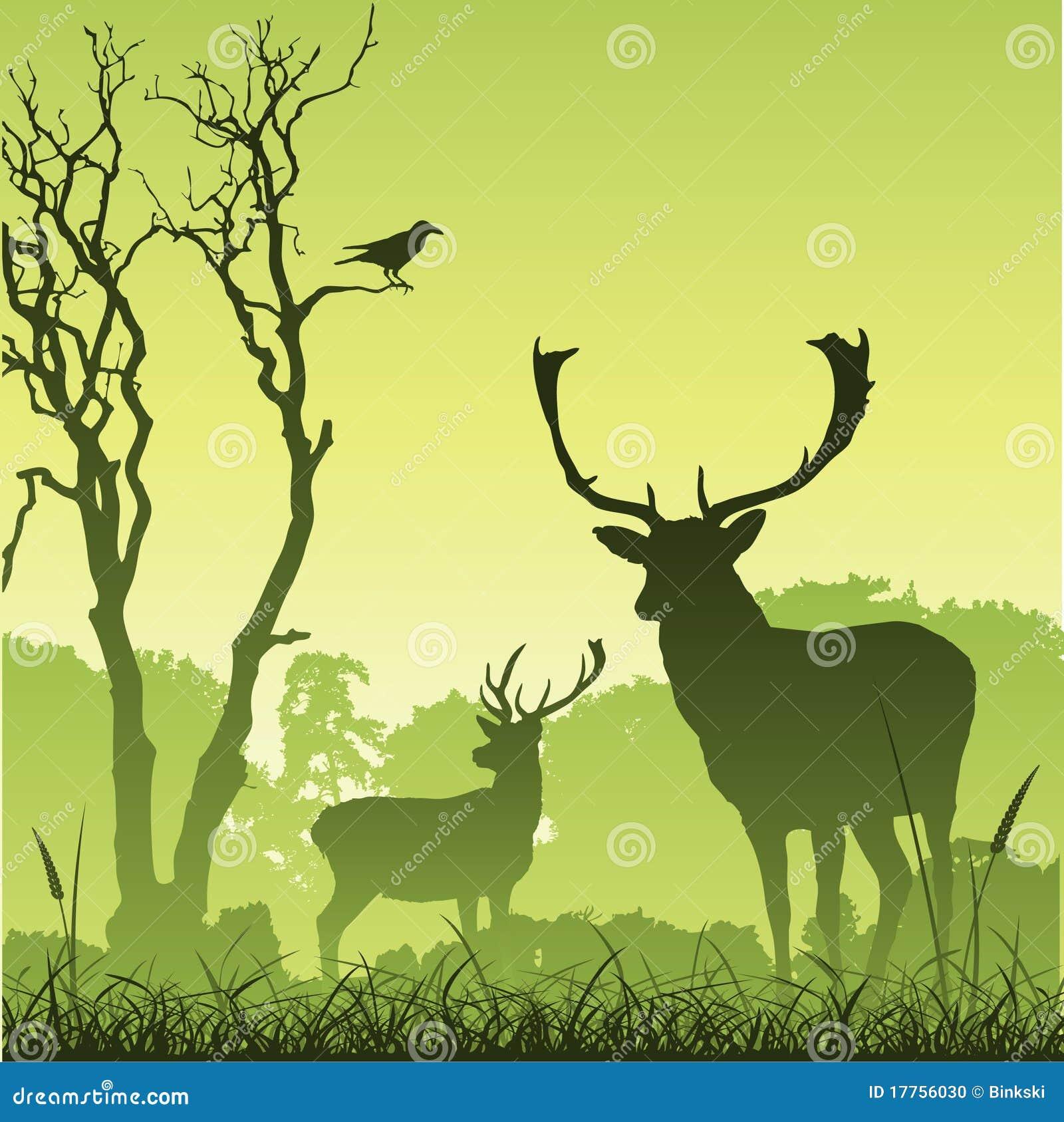 Cervos masculinos do veado