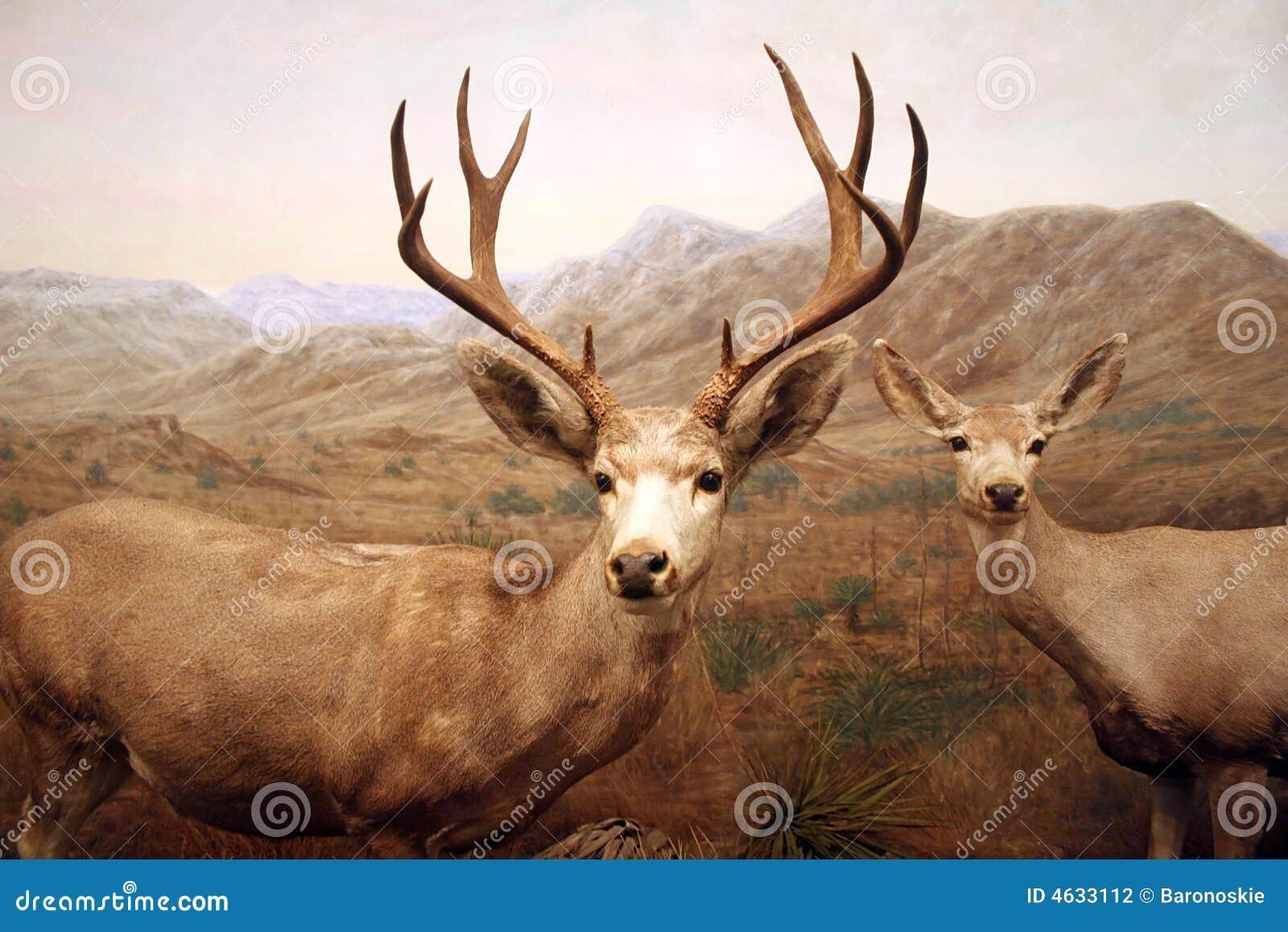 Cervos masculinos e fêmeas