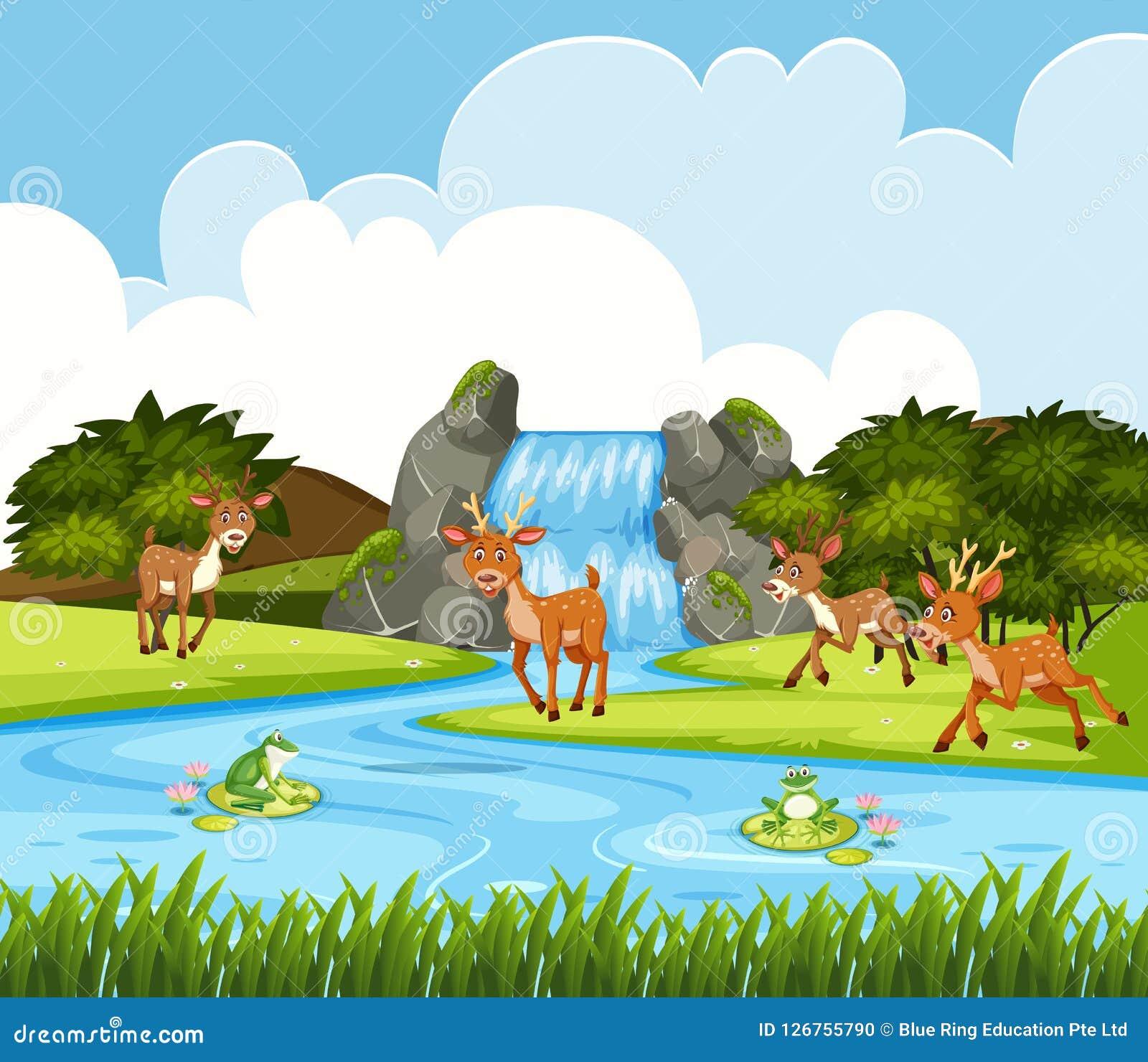 Cervos na cena da cachoeira