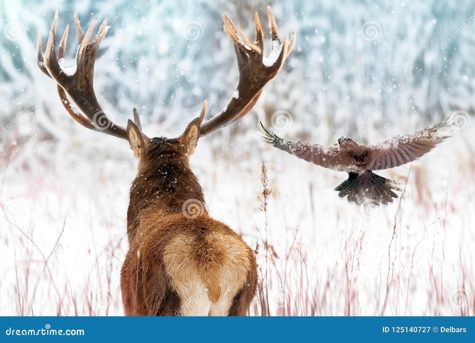 Cervos nobres com chifres grandes e corvo em voo em uma imagem do inverno do Natal da floresta feericamente do inverno