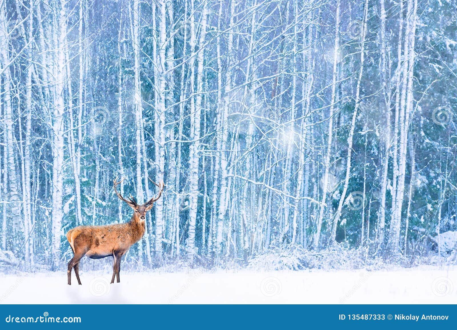 Cervos nobres contra o Natal feericamente artístico da floresta nevado do inverno Imagem sazonal do inverno
