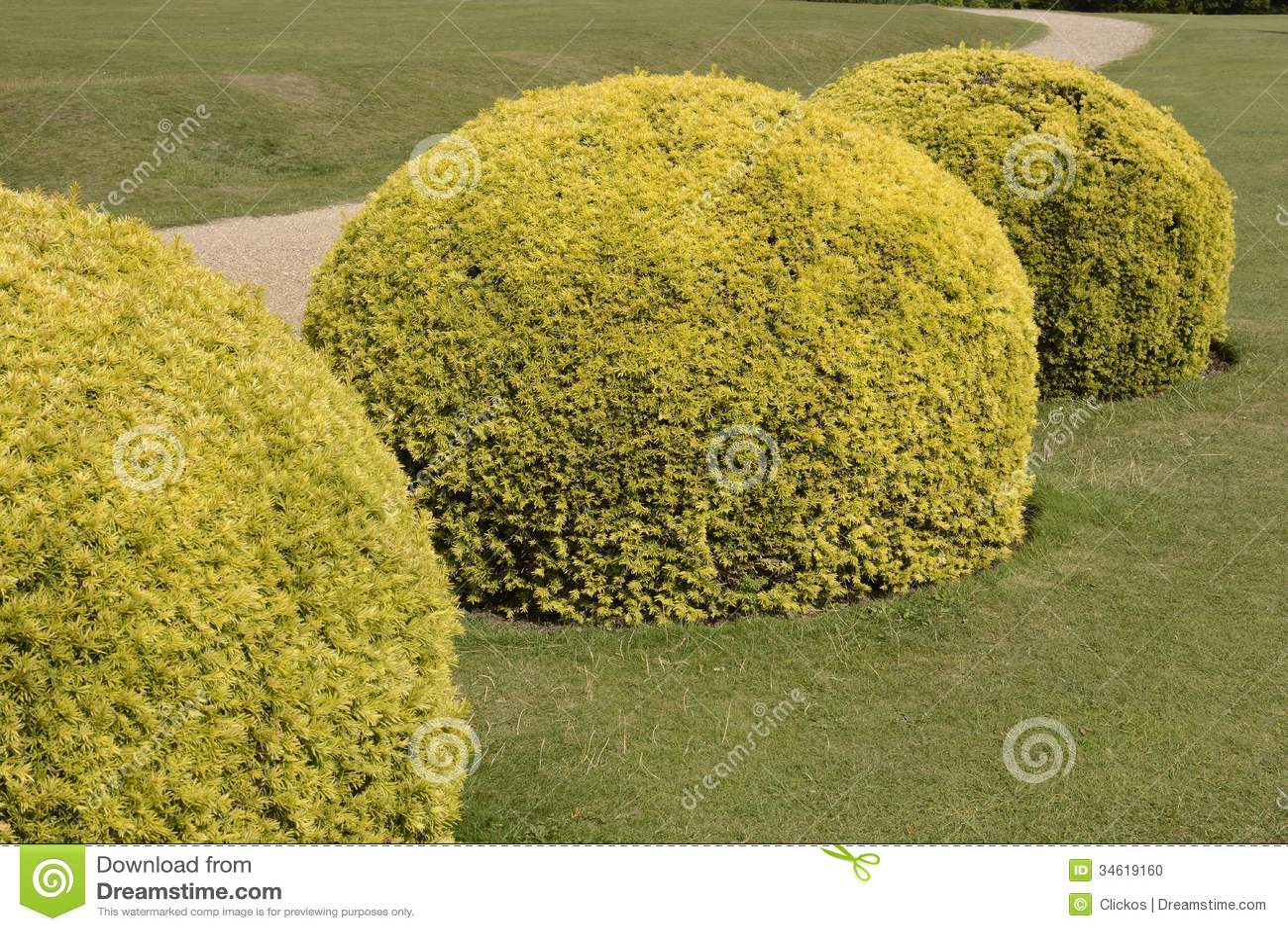 Cespugli del tasso dell 39 ars topiaria nel giardino inglese for Cespugli giardino