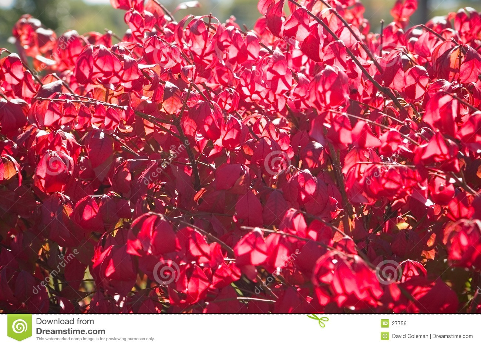 Cespuglio di autunno