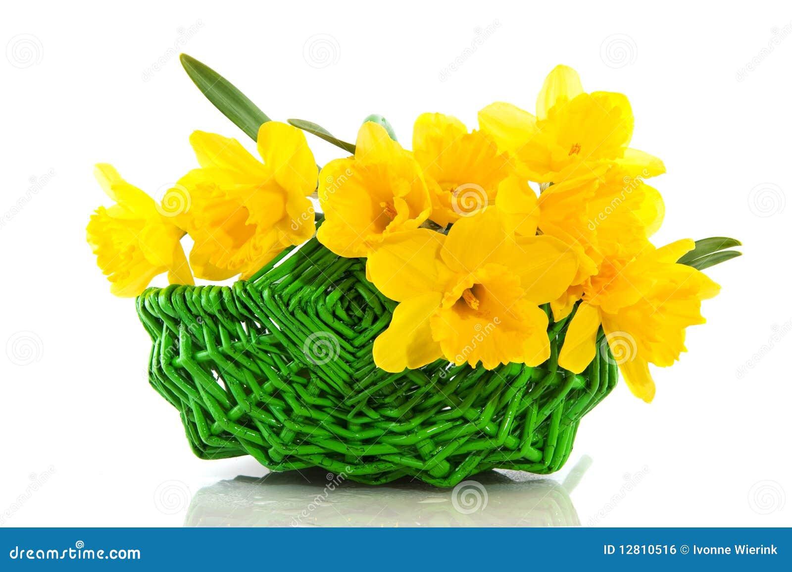 Cesta com daffodils