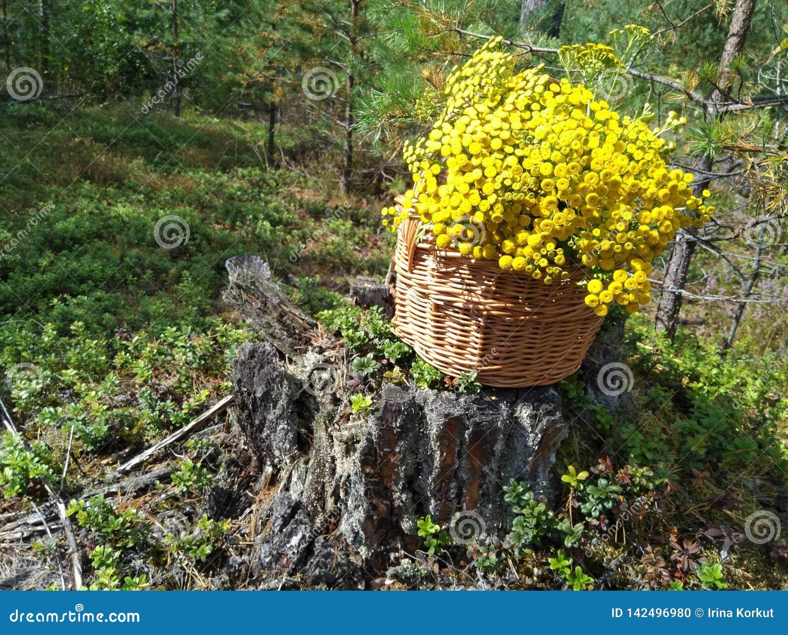 Cesta de madera muy bonita llenada de las flores amarillas