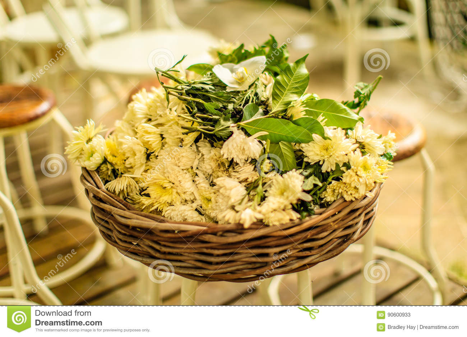 A cesta redonda do Rattan com crisântemo branco floresce em um tamborete Luz da manhã