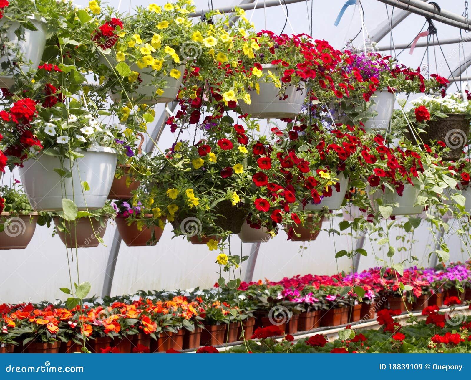 Cestas colgantes de la flor im genes de archivo libres de regal as imagen 18839109 - Plantas colgantes ...