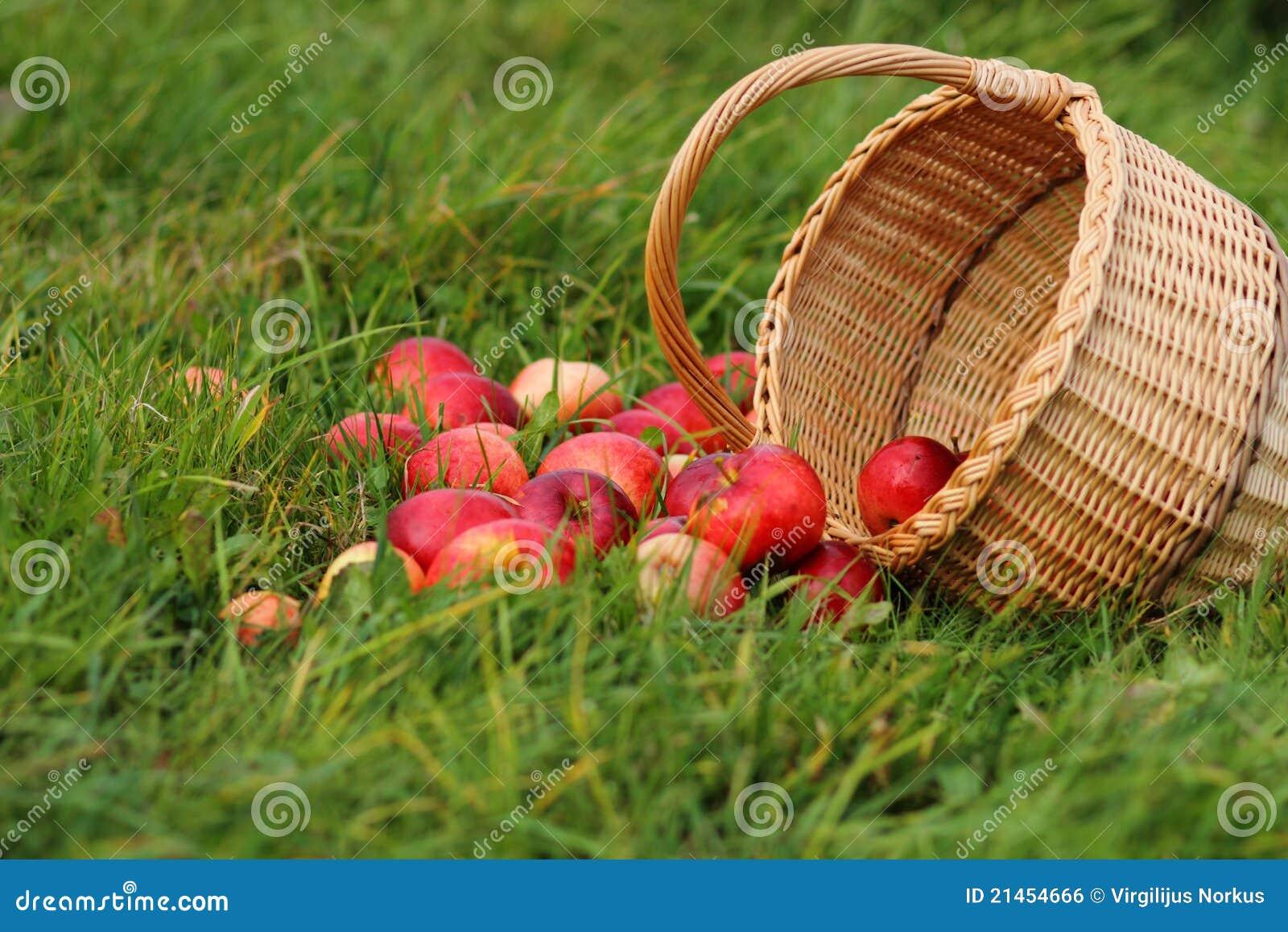 Cestino del Apple