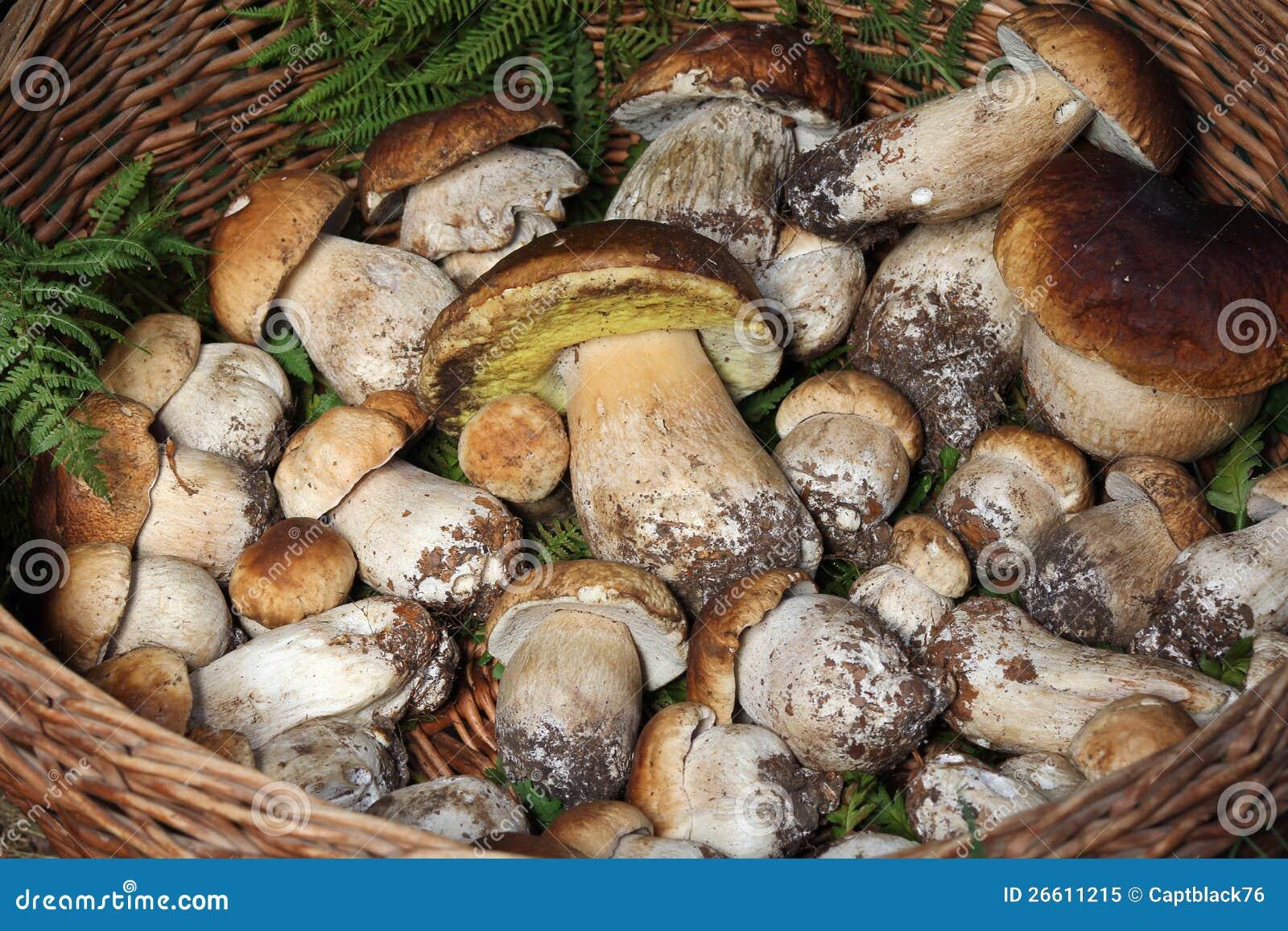 Che cosa stai pensando adesso n° 3 - Pagina 6 Cestino-di-vimini-pieno-dei-funghi-26611215
