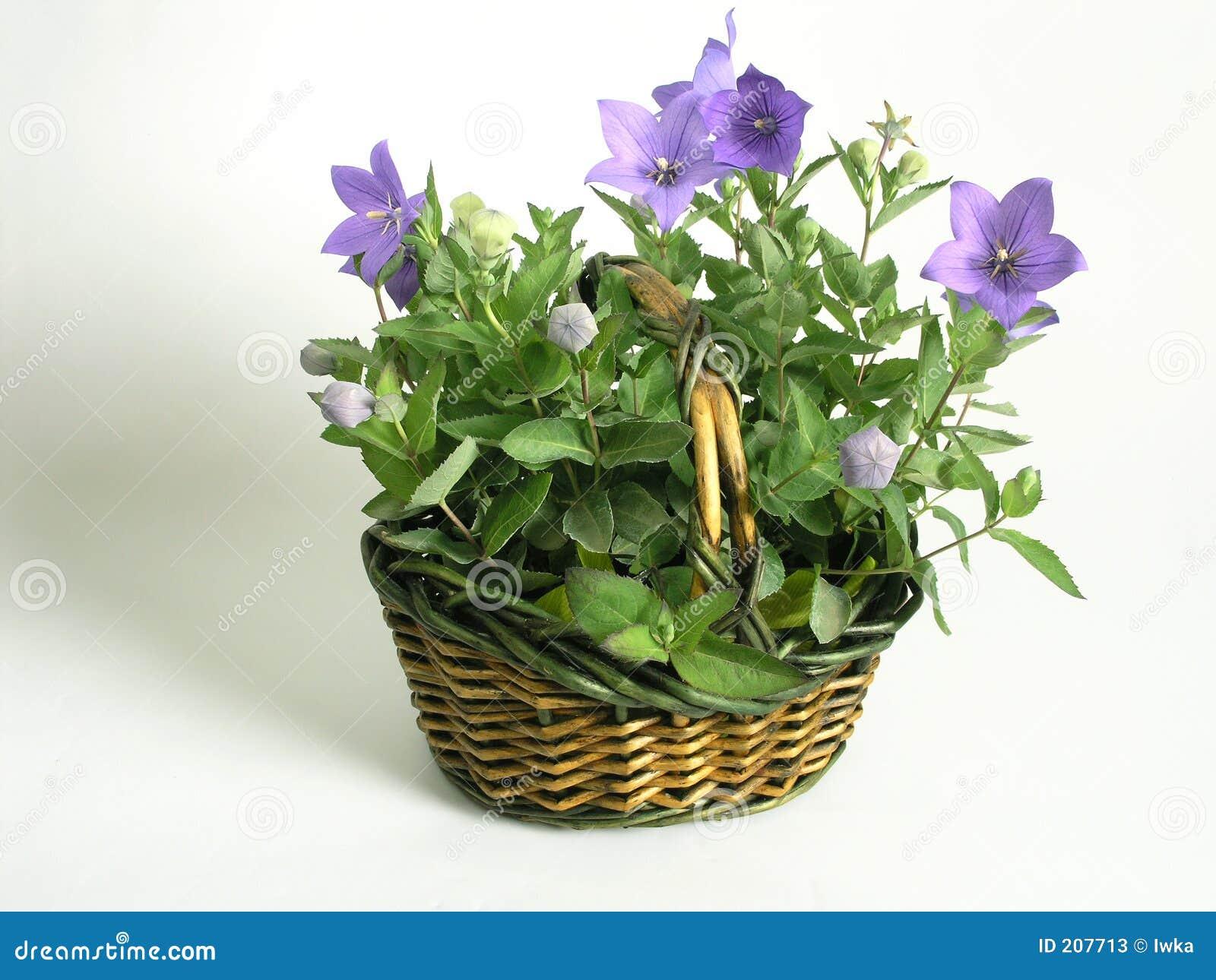 Cestino in pieno dei fiori