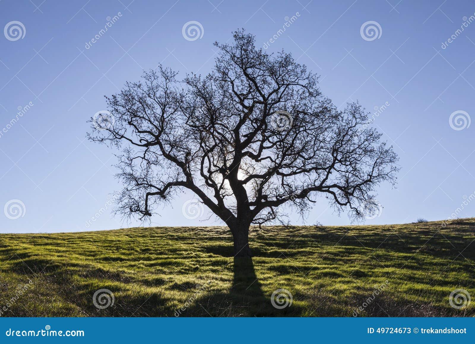 Ch ne blanc sans feuilles avec l 39 herbe de ressort photo - Arbres sans feuilles ...