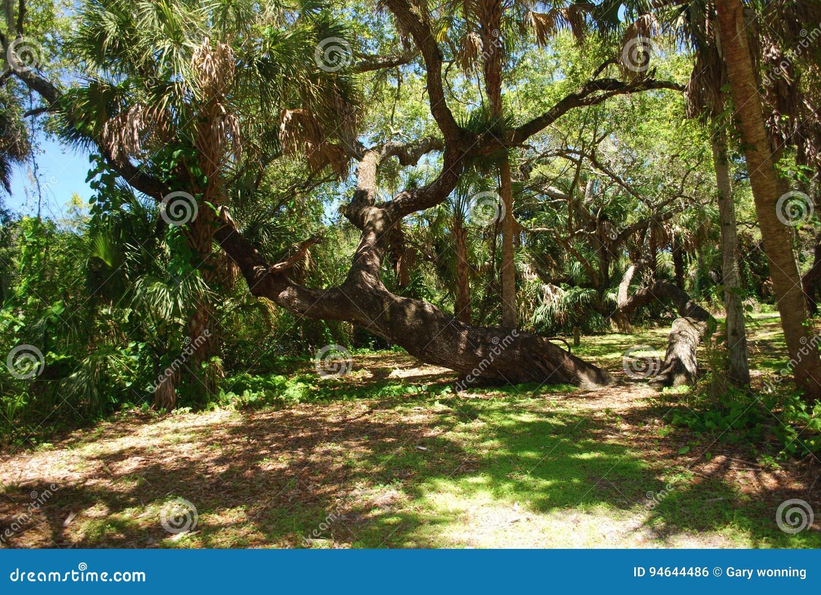 l'eau de Sarasota branchement qui est Emily Maynard datant 2013