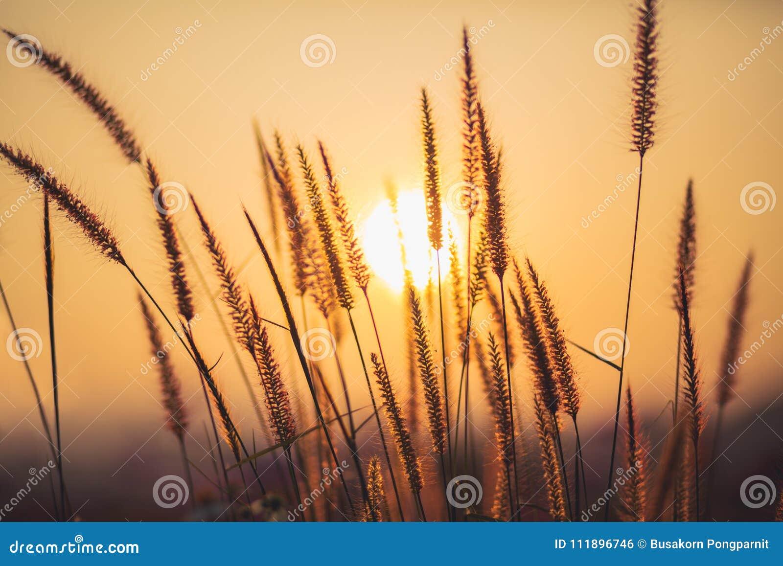 Chíbese el fondo con el haz del sol, naturaleza suave del extracto del foco