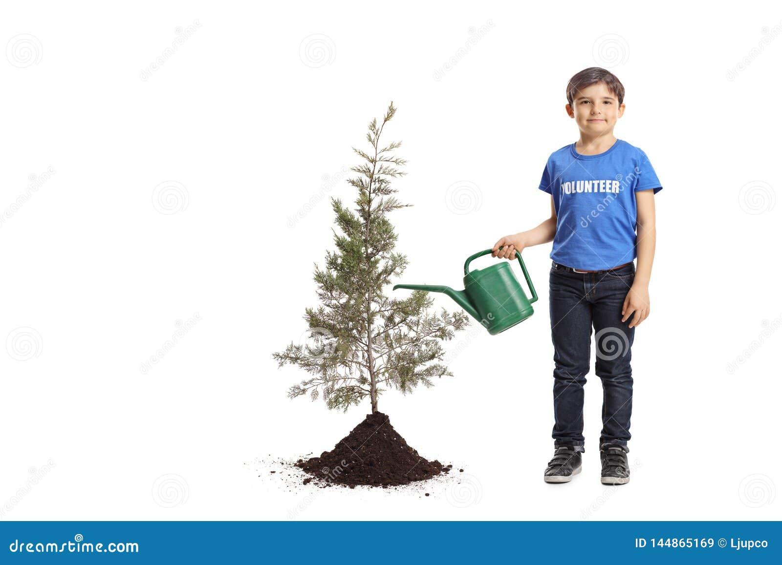 Chłopiec dolewania ochotnicza woda uprawiany drzewo