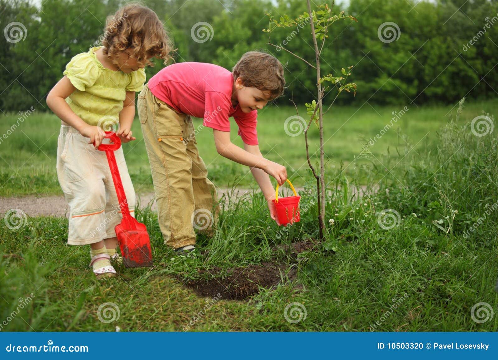 Chłopiec dziewczyny rośliny drzewo