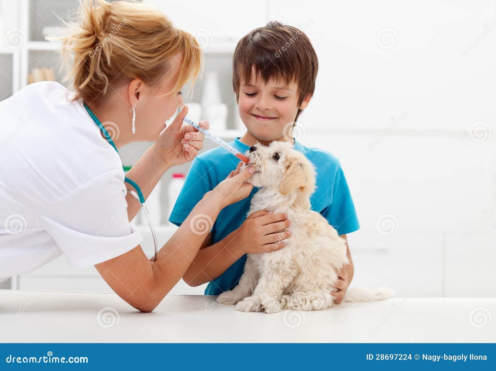 Chłopiec przy weterynaryjnym z jego psem