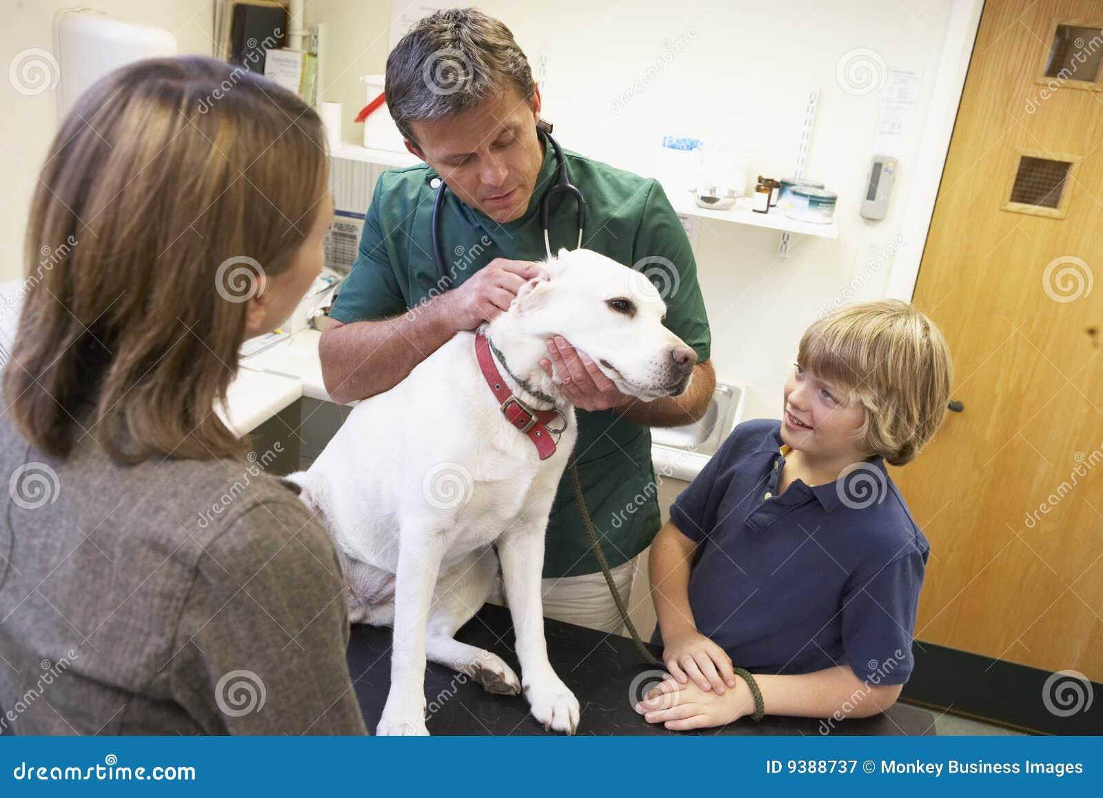 Chłopiec psiego egzaminu macierzysty bierze weterynarz