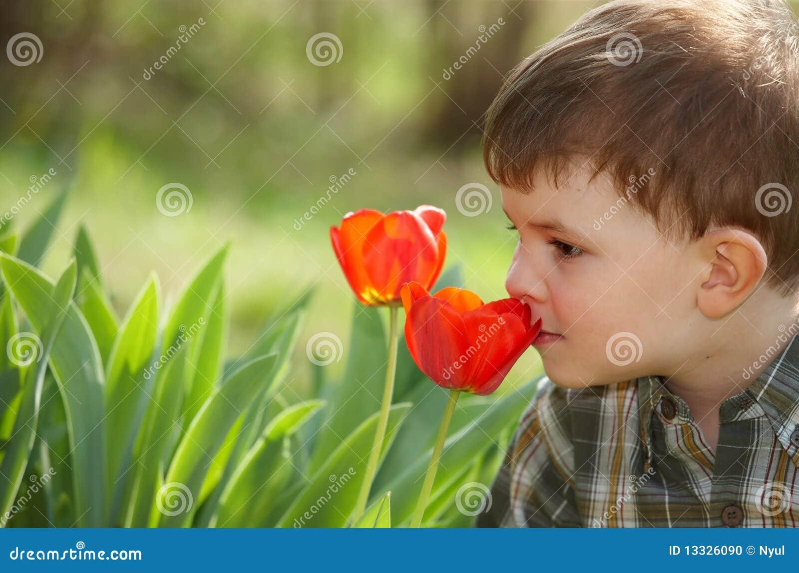 Chłopiec tulipan mały target661_0_