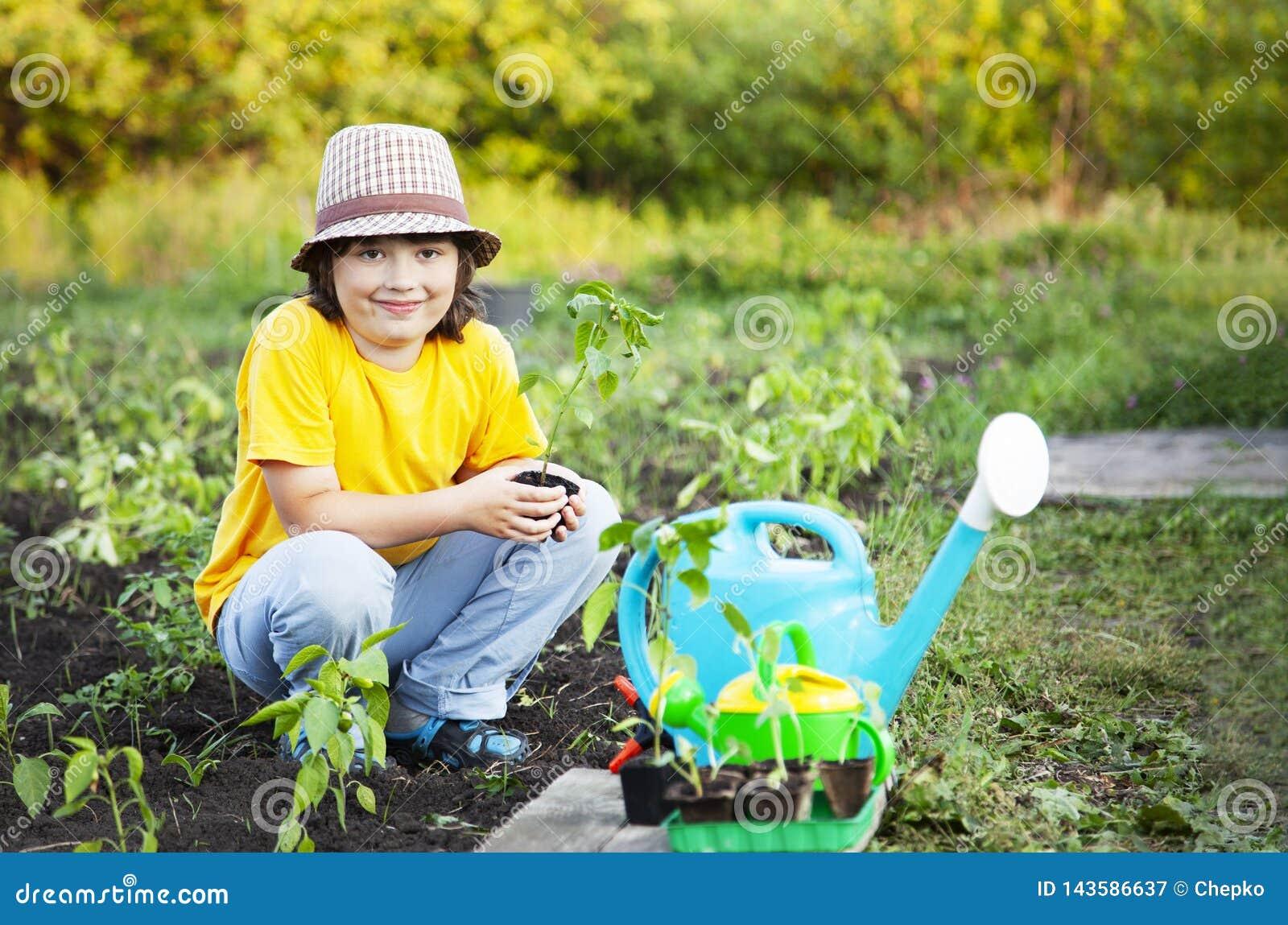 Chłopiec w ogródzie podziwia rośliny przed zasadzać Zielona flanca w dziecko rękach