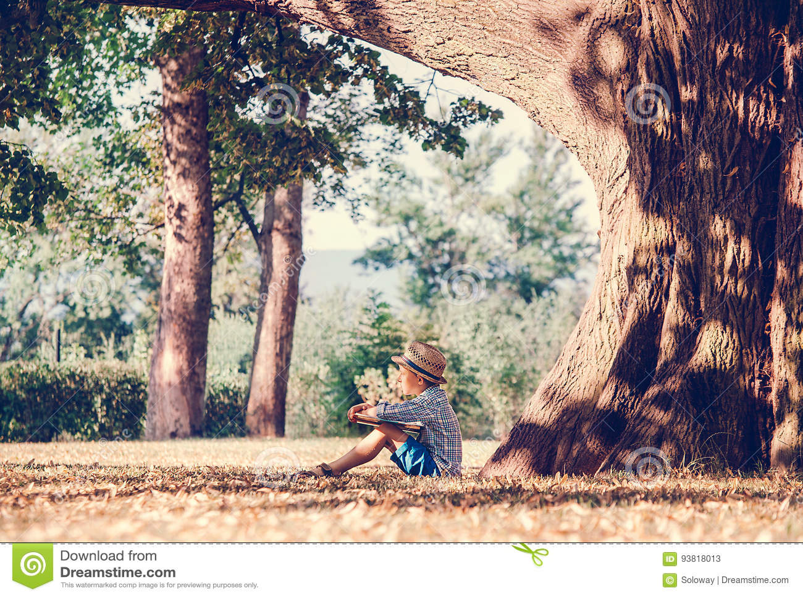 Chłopiec z książką siedzi pod dużym drzewem w złotym lata popołudniu