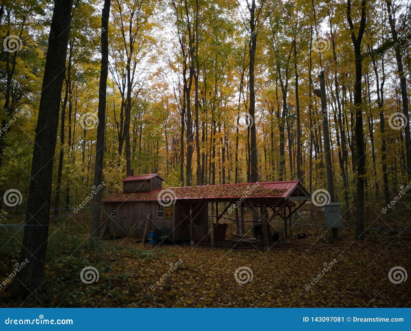Chałupa po środku lasu