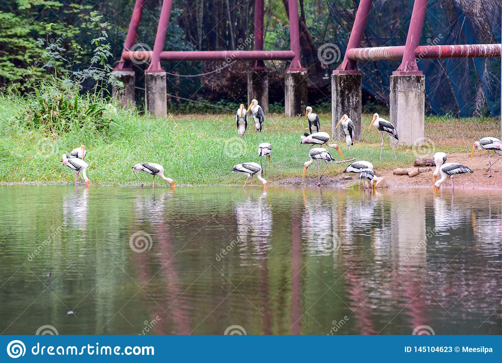 Chai Nat泰国12月26日2019看见在Chai Nat飞禽公园的鸟是chainat省地方  鸟笼是最大的