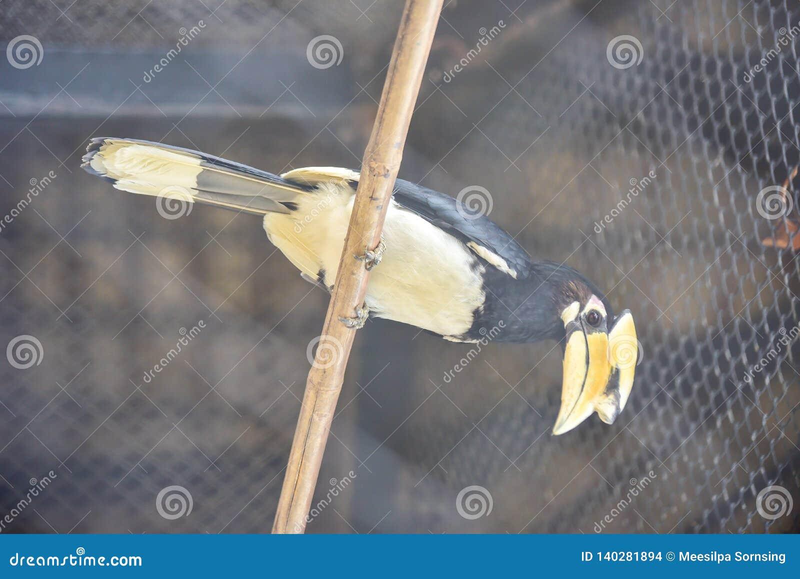 Chai Nat Tail?ndia 26 de dezembro de 2019 v? que os p?ssaros em Chai NAT Bird Park s?o um lugar da prov?ncia do chainat A gaiola