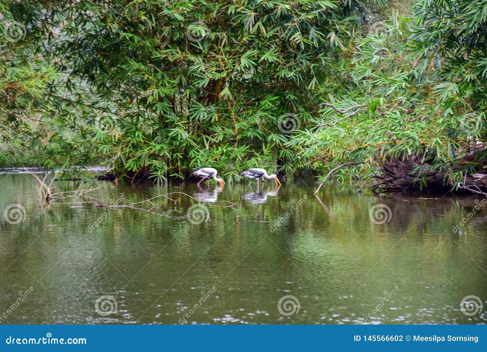 Chai Nat Thailand December 26 2019 See Birds At Chai NAT