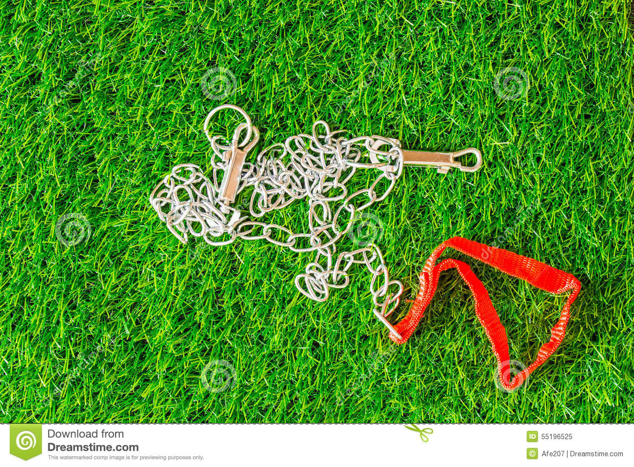 Chain Interpreter Dogs On Green Grass Texture Background Eco Con Stock Photo - Image ...