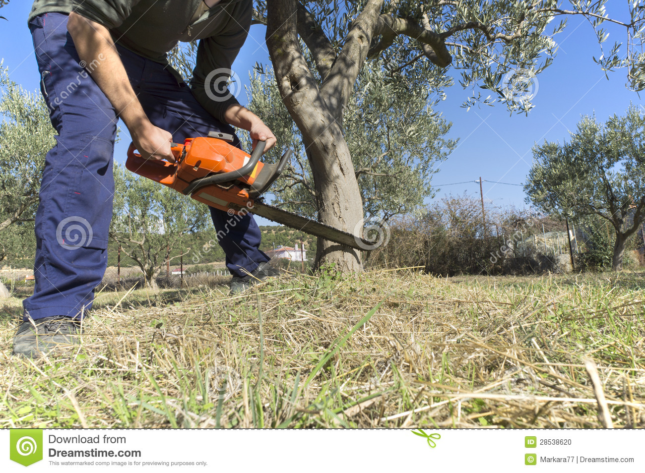 Chainsaw Cutting Wood Stock Photo Image 28538620