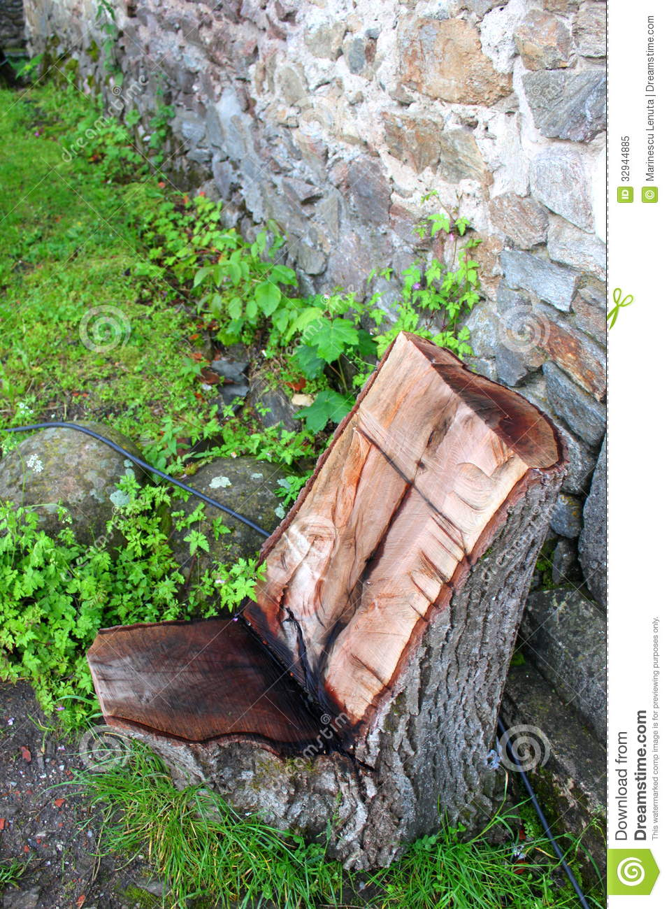Chair of a tree trunk stock image. Image of object, trunk ...