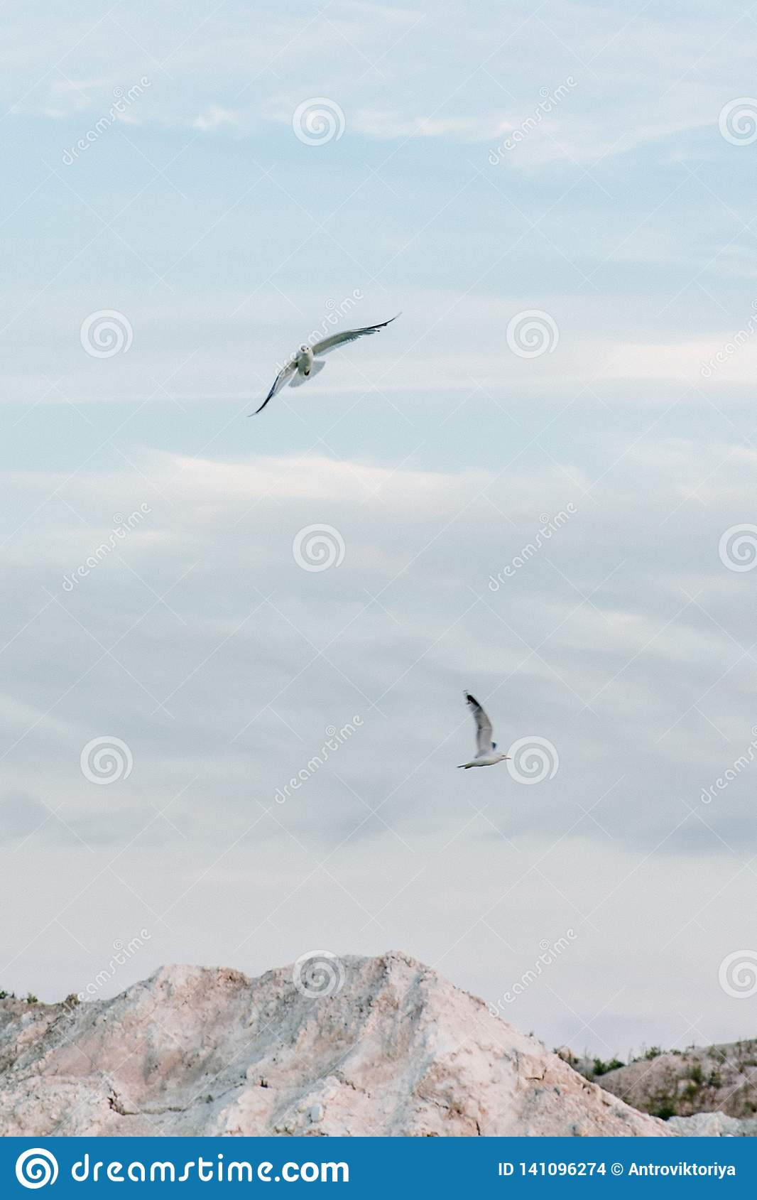 Gulls fly in the sky over a mountain lake