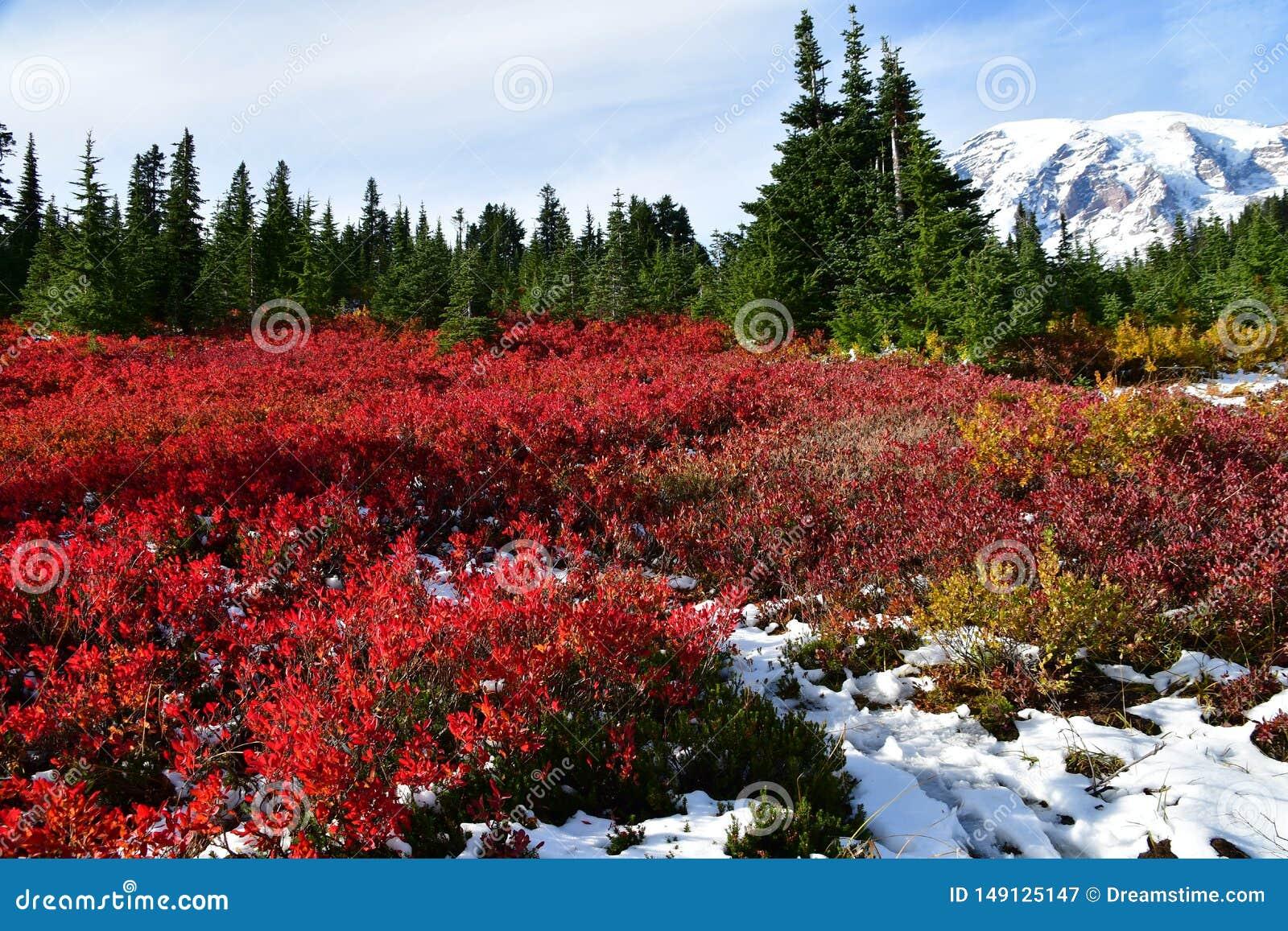 Chamas mais chuvosas do Mt com folhagem de outono vermelha