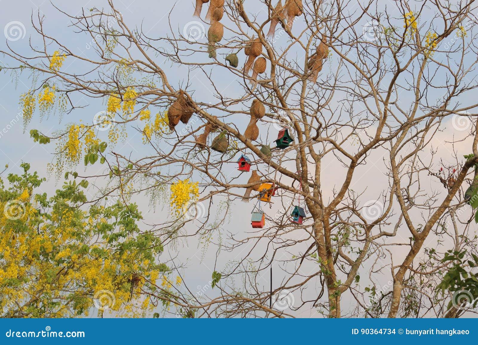 Chambre d oiseau